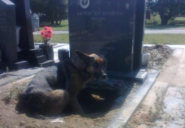 dog-grieving-for-owner-underneath-grave
