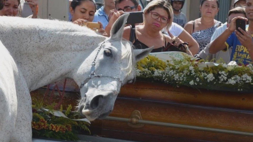 Horse breaks down after Realizing His Owner and Best Friend Was Inside this Casket—Heart-breaking!