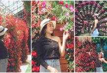 ផ្ទះផ្កា Begonia បាត់ដំបង